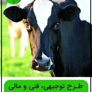 طرح توجیهی گاو شیری