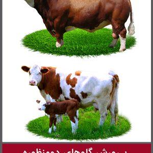 پرورش گاوهای دومنظوره با تاکید بر نژاد سیمنتال