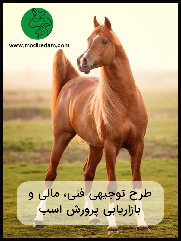 طرح توجیهی فنی، مالی و بازاریابی پرورش اسب