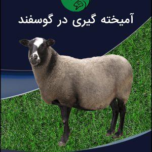 آمیختهگیری در گوسفند