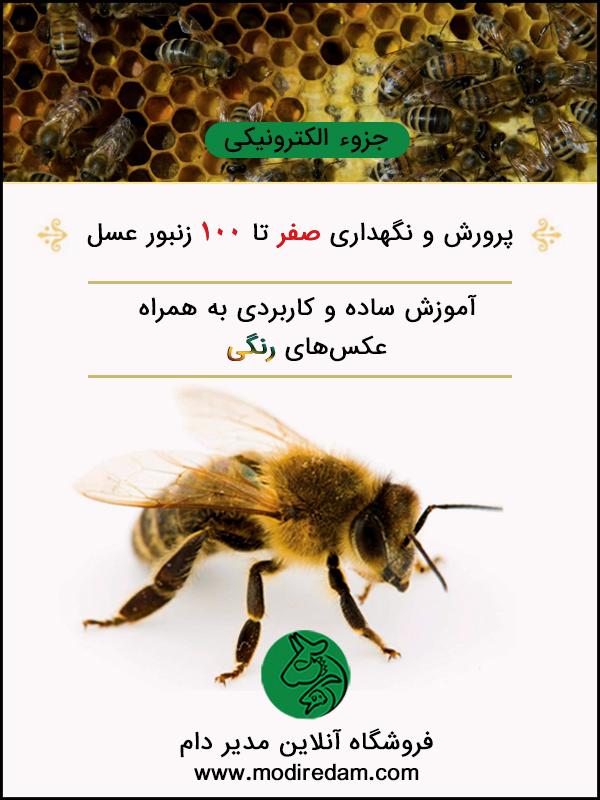 پرورش و نگهداری صفر تا ۱۰۰ زنبور عسل