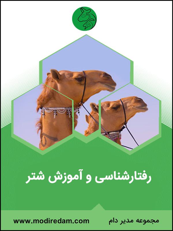 www.modiredam.com