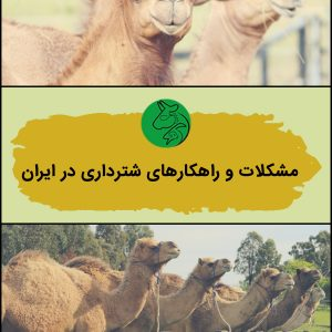 مشکلات و راهکارهای شترداری در ایران