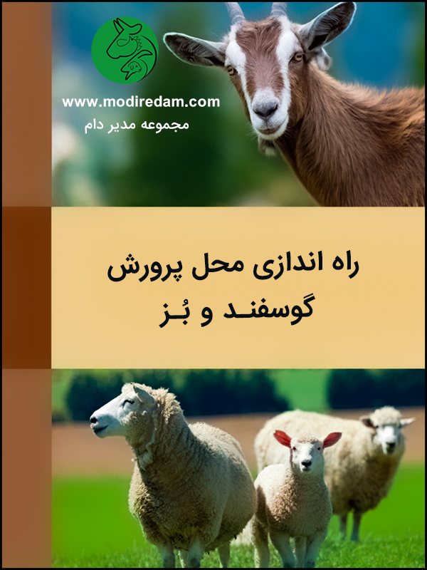 راهاندازی محل پرورش گوسفند و بز