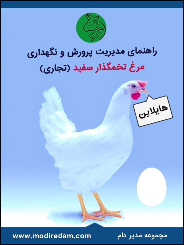 راهنمای مدیریت پرورش و نگهداری مرغ تخمگذار سفید