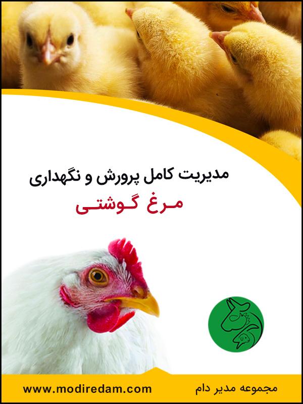 مدیریت کامل پرورش و نگهداری مرغ گوشتی